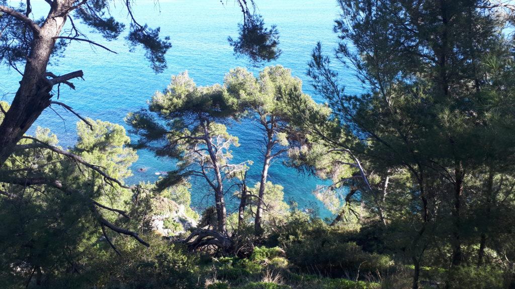 Photo de paysage, des pins et derrière la mer.