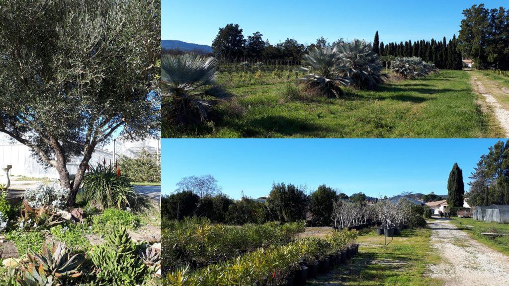 3 différentes vues des espaces verts du site.