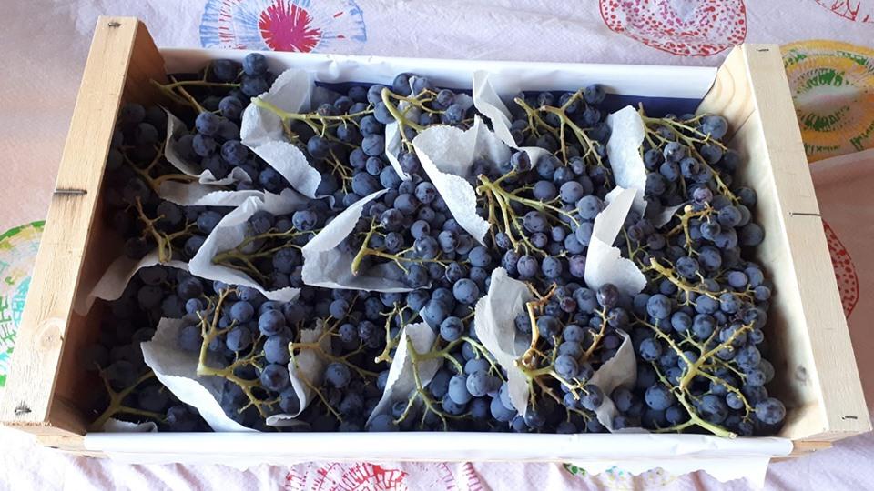Photo d'une cagette remplie de raisin Muscat, petits grains bleu nuit, très savoureux.