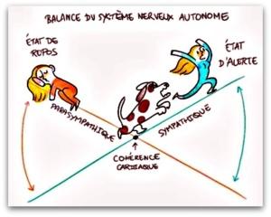 Balance du système nerveux autonome : à gauche un personnage dort, état de repos, à droite un personnage se fait courser par un chien, état d'alerte. Entre les deux, le point d'équilibre : cohérence cardiaque.
