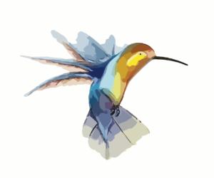 Suite de ma présentation : je suis un colibri